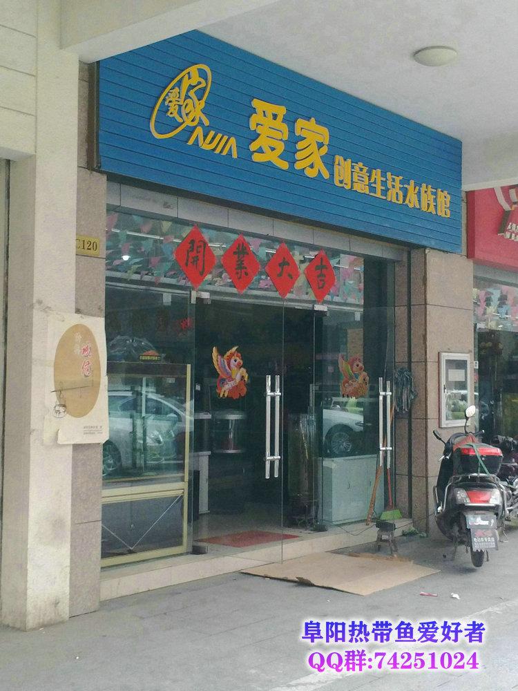 阜阳的热带鱼水族店